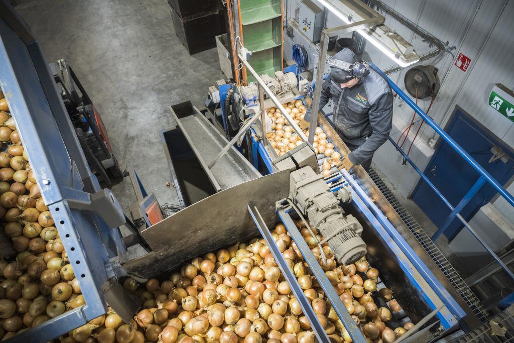 Tuotantolinjalla. Ionut-Ciprian työskentelee päivittäin linjalla, missä sipulit kerätään säkkeihin ja lähetetään edelleen suurille tukkuliikkeille kuten Inex Partnersille, Keskolle ja Lidlille. Hauskinta on robottien ohjaaminen. Kuva: Vesa-Matti Väärä.